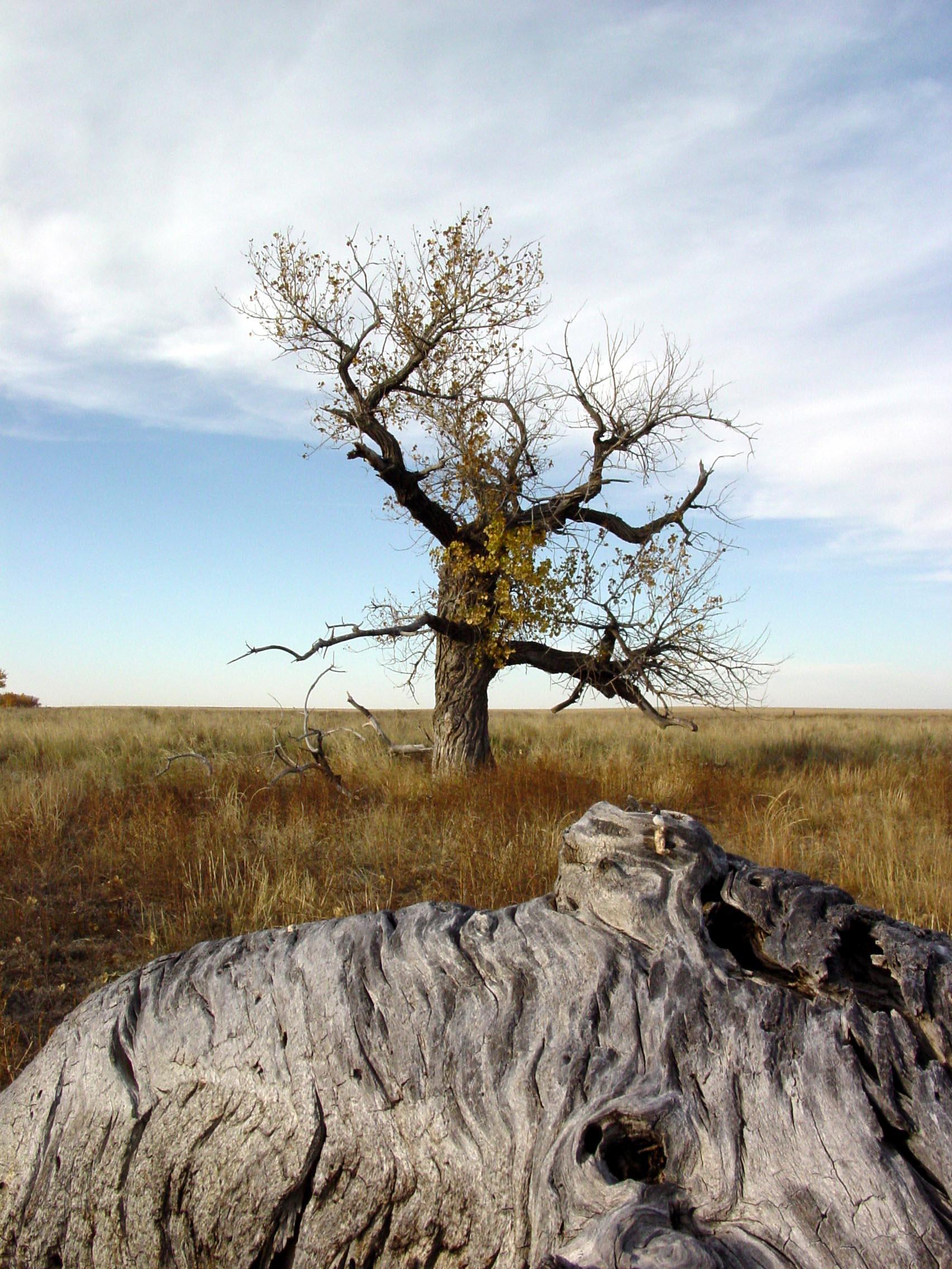 SITE TREE 3-16-2011